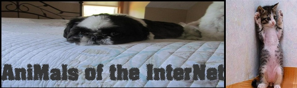 Animals of the Internet