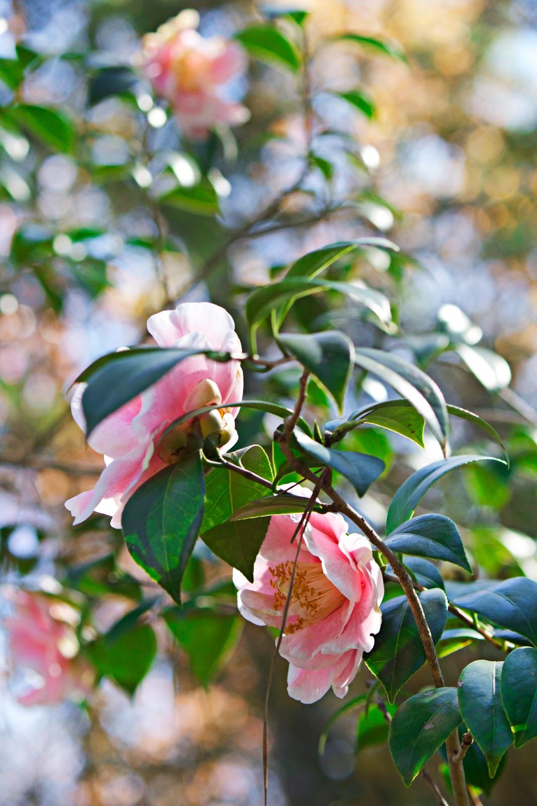 pink foliage - photo copyright Allison Beth Cooling