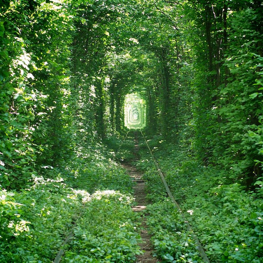 FOTOFRONTERA: El túnel natural de la felicidad - Arboles, plantas