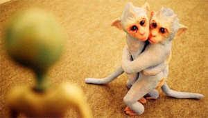 foto hewan lucu gokil