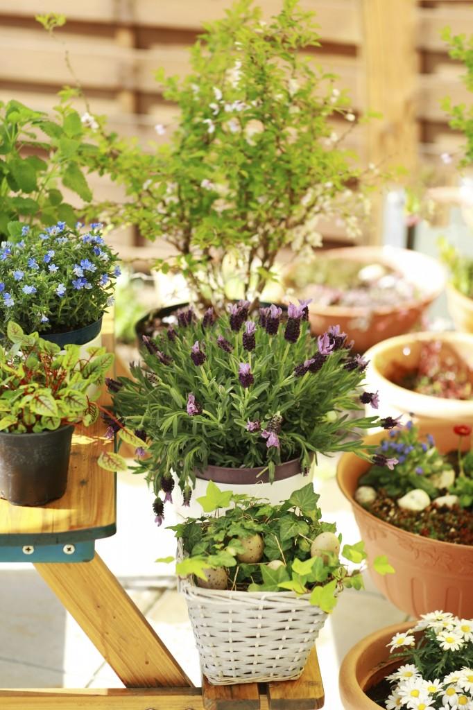 El jardinero plantas y flores hierbas ideal para el - El jardinero en casa ...