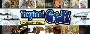 猛禽類の販売の専門店「トロピカル・ジェム」