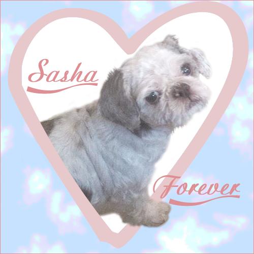 Sasha Forever