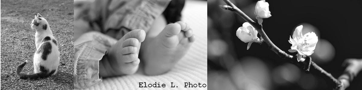Elodie L