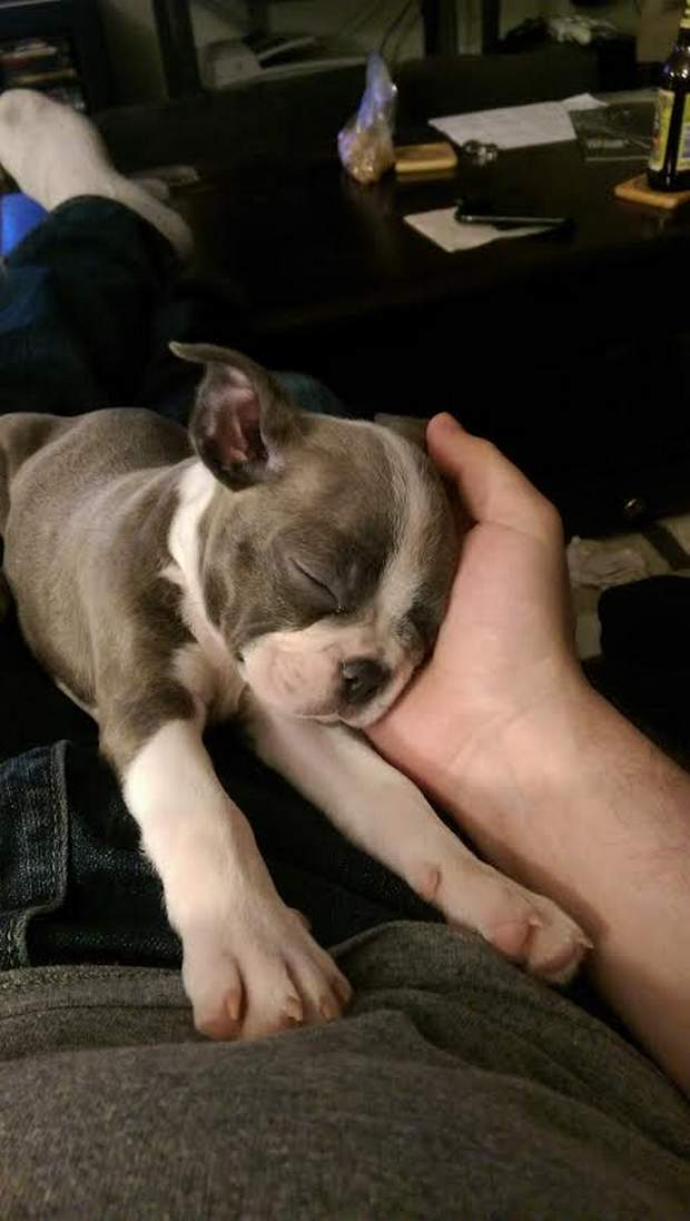 Cute dogs - part 103, cute dog pictures, best cute dog photo, funny dog pictures
