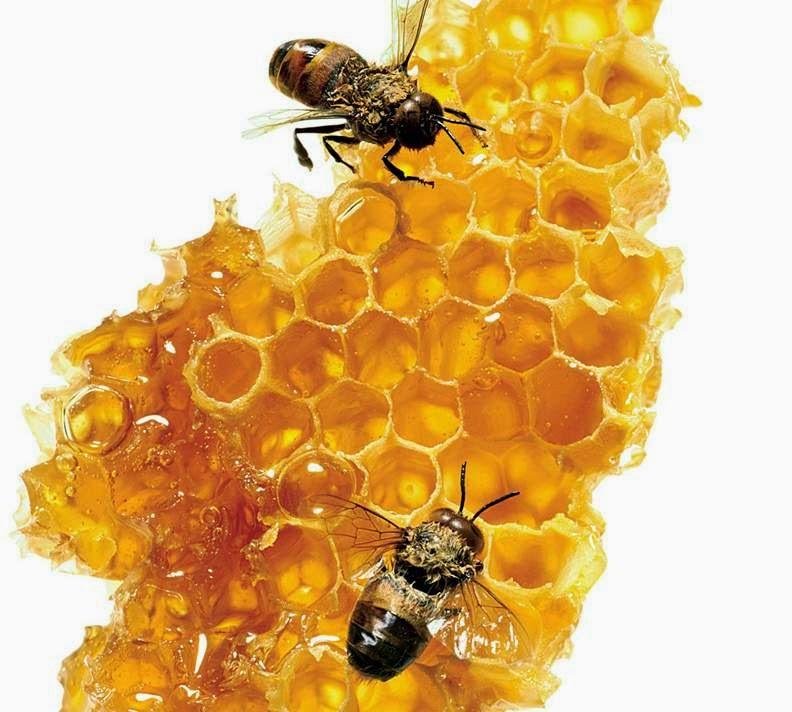 propolis, pengawet alami madu