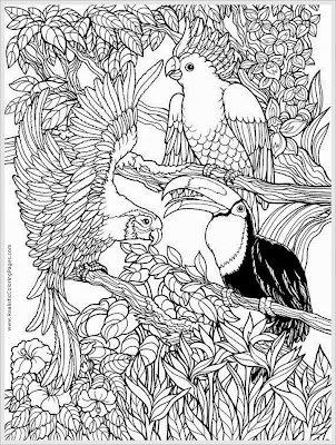 Parrots Bird Adult Free Coloring Pages Printable