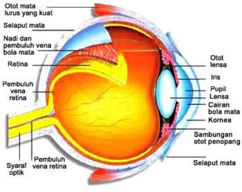 Pengertian Mata