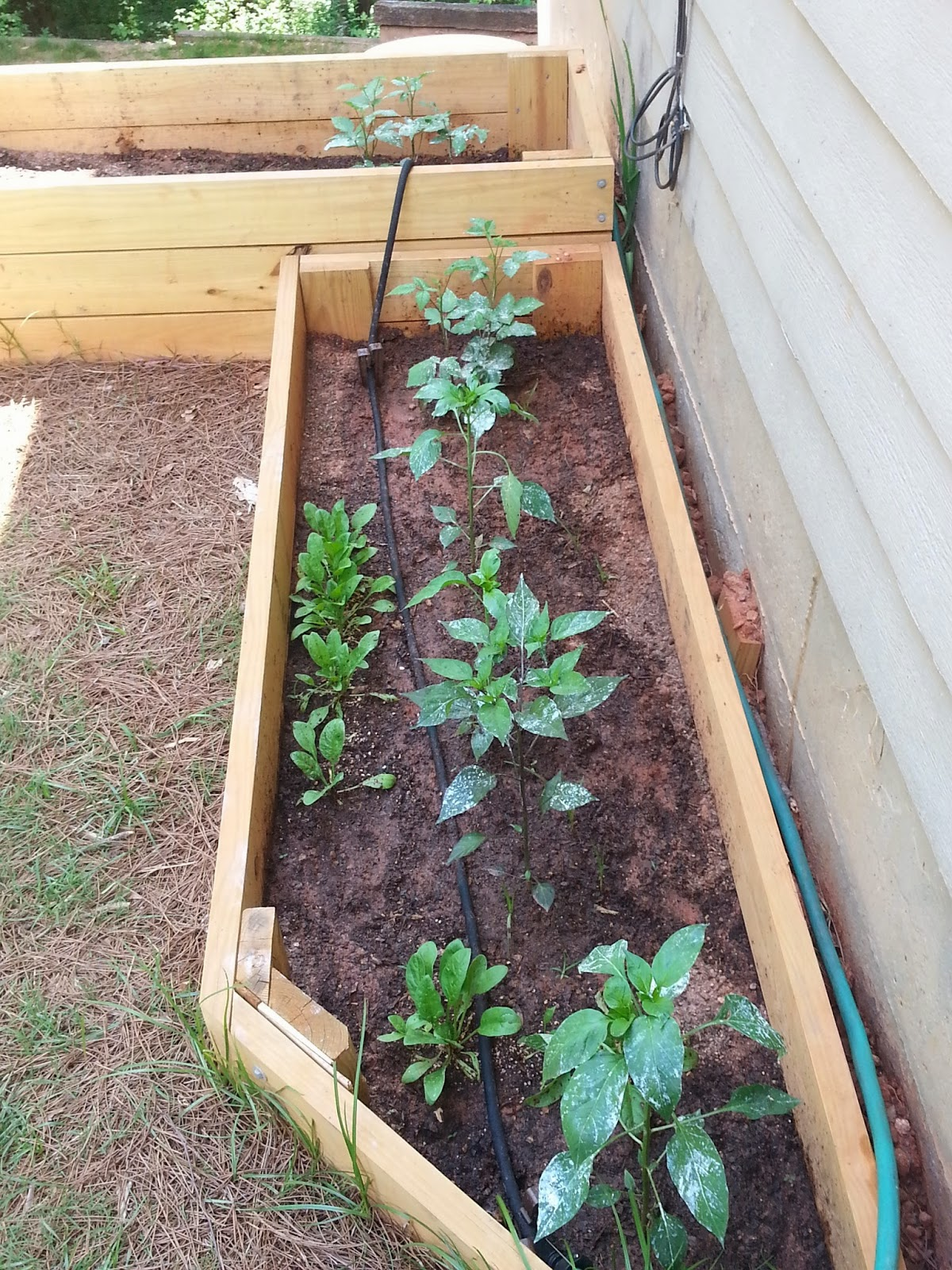 installing drip system irrigation in raised bed gardens