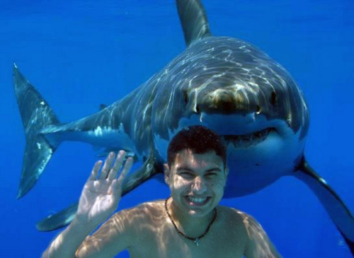 THE BEST SHARK ATTACKS In the Movies and One of Them Involves Joey