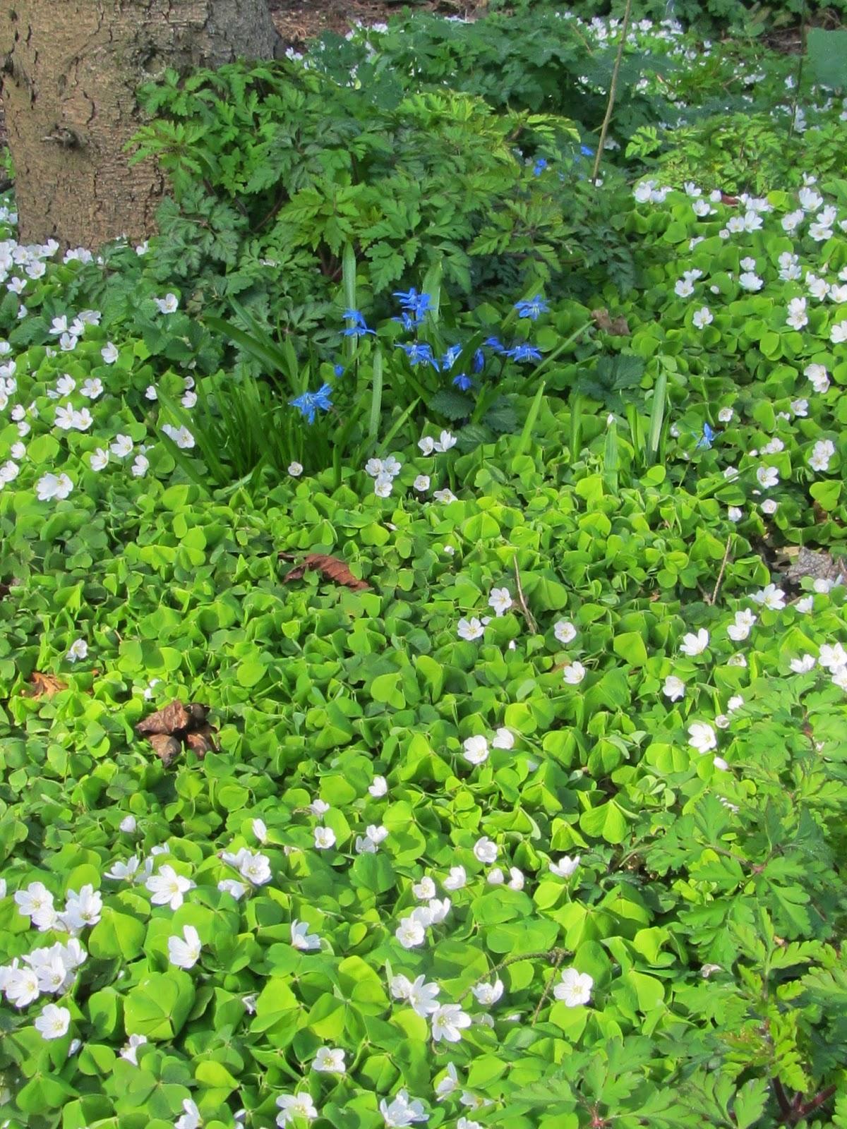 Jan Wilde een Tuin: maart 2014
