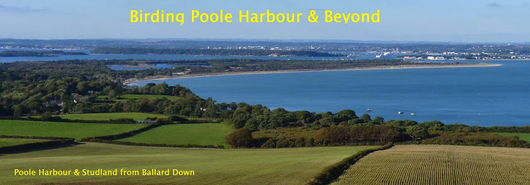 Birding Poole Harbour & Beyond