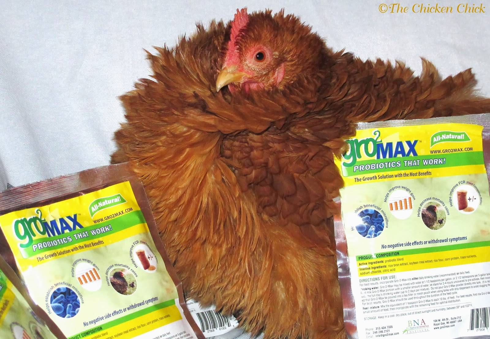 Coccidiosis can be controlled by the use of probiotics to promote competitive exclusion.
