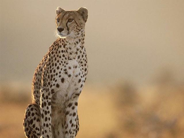 Masai+Mara+National+Park%252C+Kenya%252C