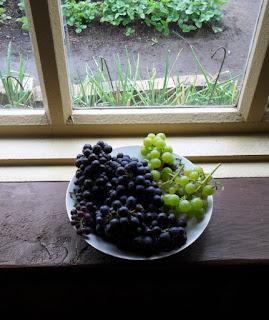 14.09. Сибирский виноград