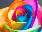 #6 Wonderful Flowers Rose Wallpaper