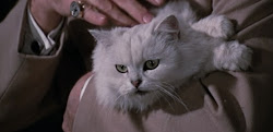 The Gallery of CLASSIC MOVIE CATS