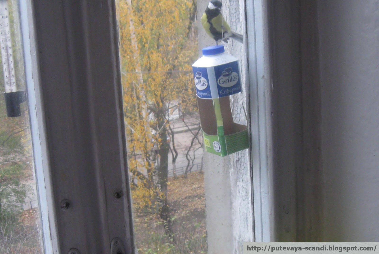 синица - красивая и умная птица