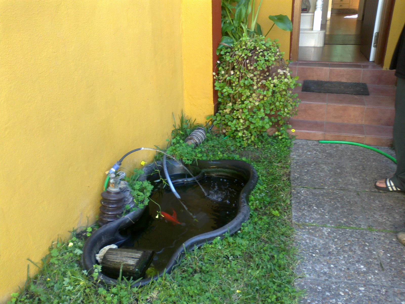 Aljavera reformas del hogar estanque para peces for Estanques para peces