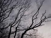 Hullámos fák.