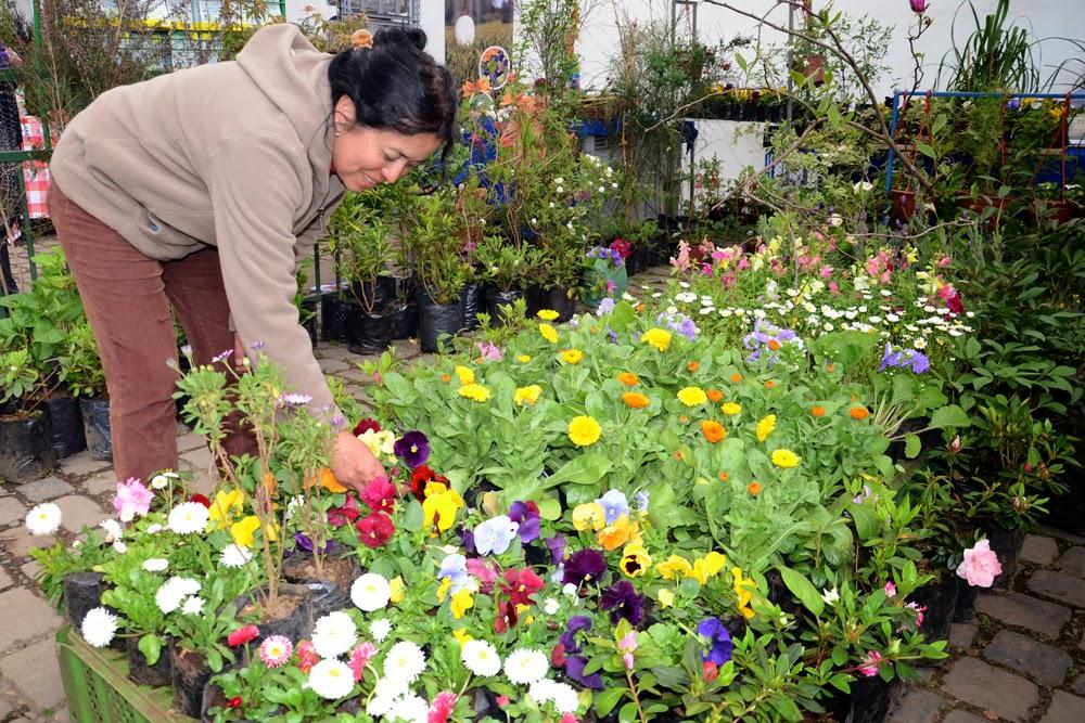 Expo flores y jardines abre sus puertas a los visitantes for Viveros en temuco