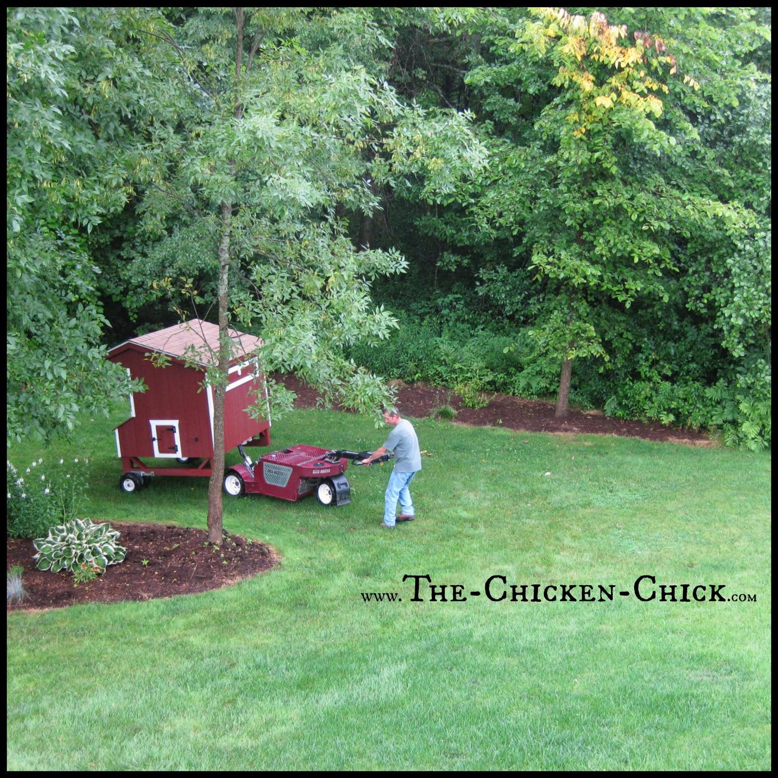 the chicken chicken coop design essentials details u0026 luxuries
