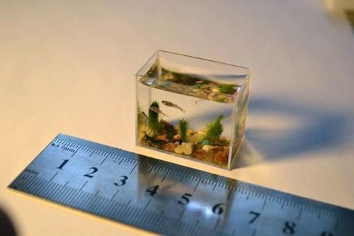 World 39 s smallest aquarium photos of mini aquarium fish for Mini aquarium
