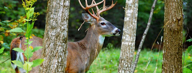 7 Tips For A Successful Deer Hunt