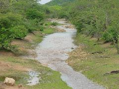 Riacho na caatinga