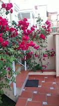 Más de cuatrocientas rosas