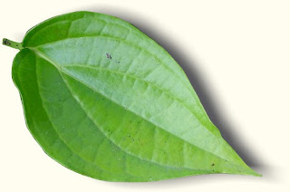 manfaat daun sirih,kandungan daun sirih