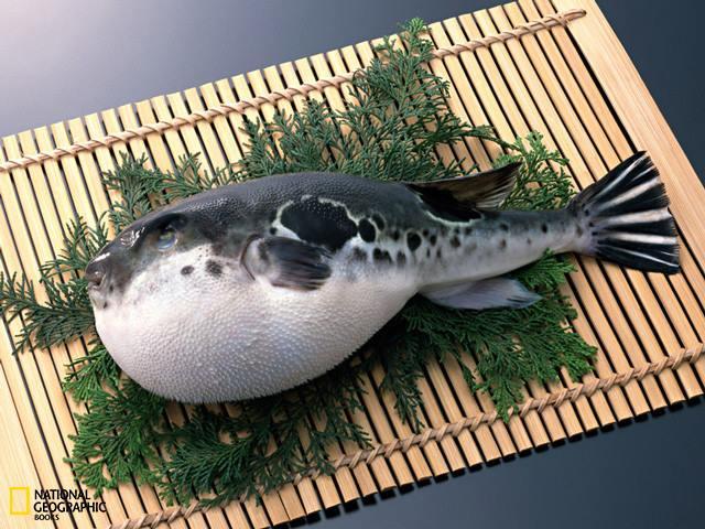 Splendid cosmos dealy poisonous fugu japanese fugu fish for Japanese puffer fish