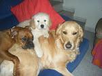 Mis Niñas, mis mascotas...