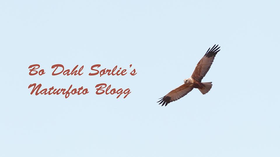 Bo Dahl Sørlie's fotoblogg