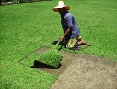 ธุรกิจปลูกหญ้า
