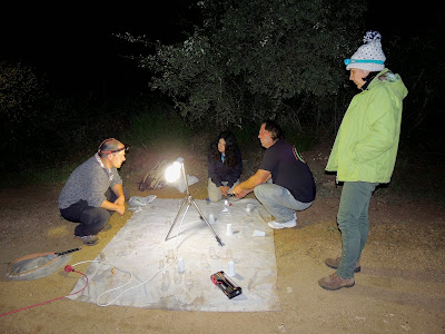 Conversaciones entorno a la lámpara