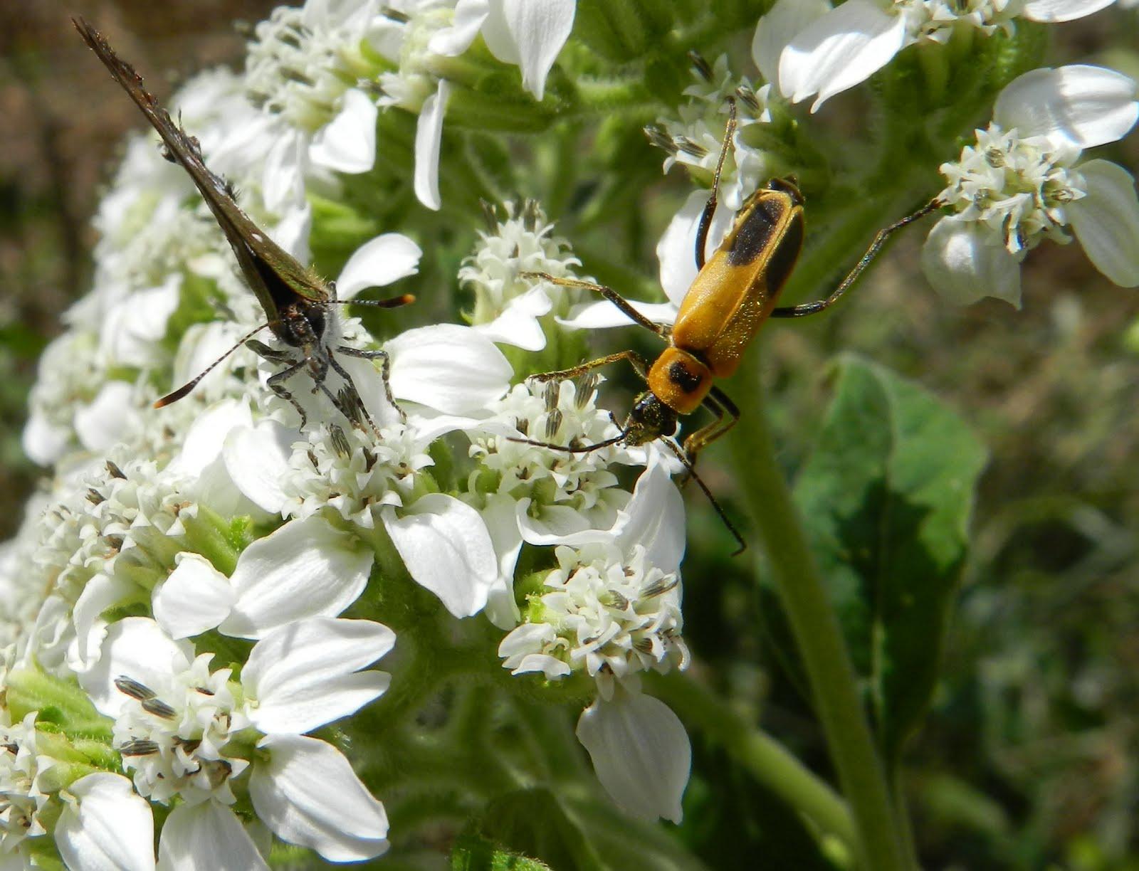 World Peace Wetland Prairie Pretty Pollinators Abound As Summer Drifts Toward Fall