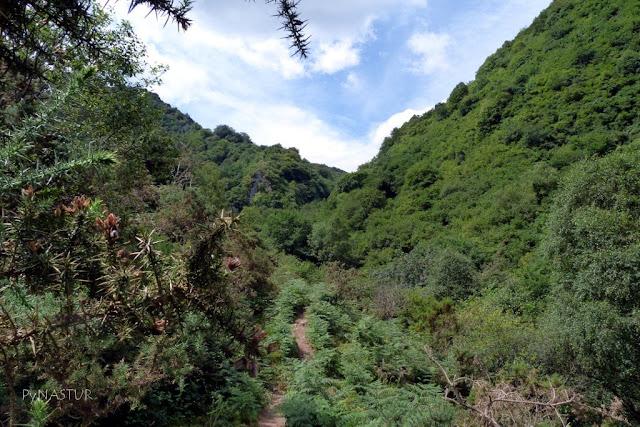 Sierra del Sueve Asturias - Hayedo de La Biescona