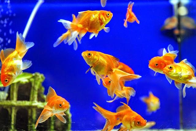 Abundancia amor y plenitud consejos de feng shui para - Los peces traen mala suerte ...