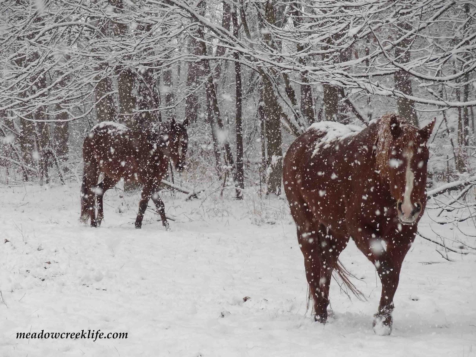 Meadow Creek Farm Snow Angels