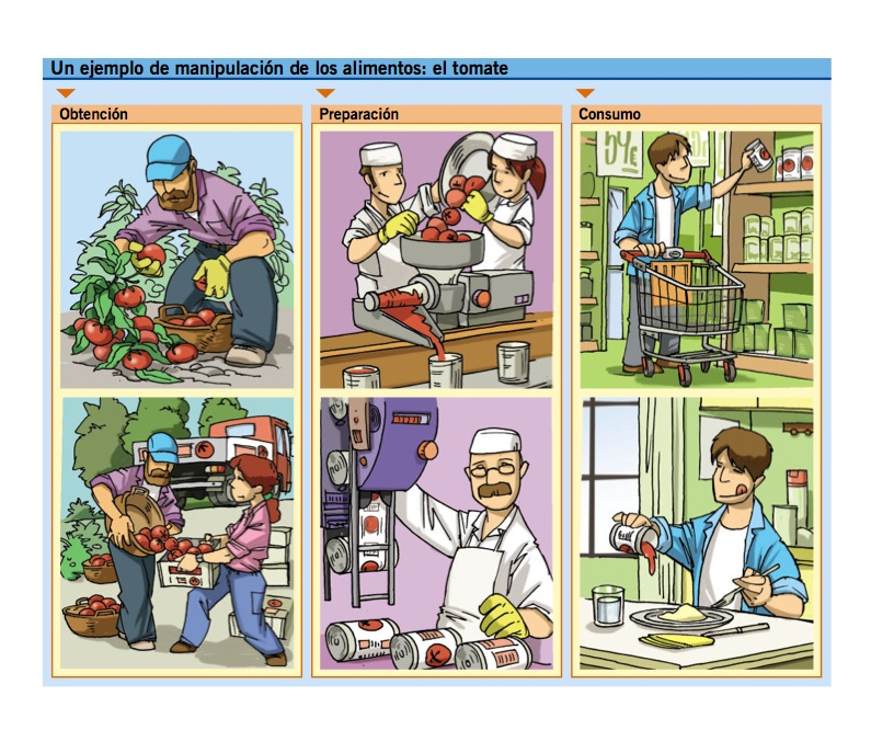 Elaboracion Del Pan Proceso de Elaboraci n Del
