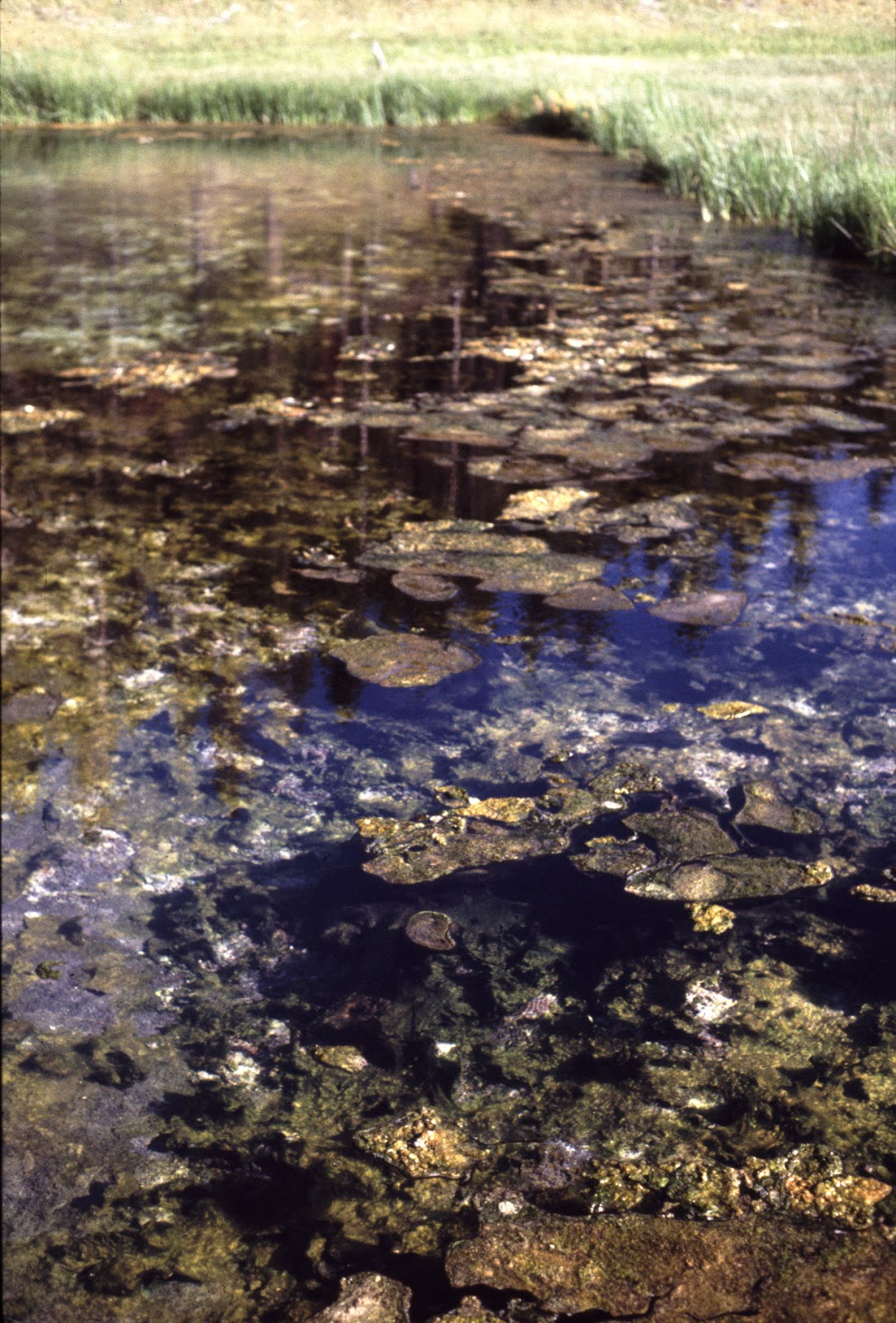 Pond flora