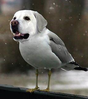 GAMBAR DOGBIRDS Bintang Persilangan Burung dan Anjing