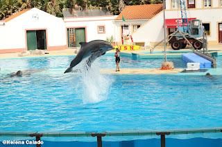 fotografia dos golfinhos