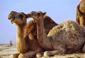 Kisah Tsamud : Penduduk Lembah Petra Yang Jago Memahat Gunung