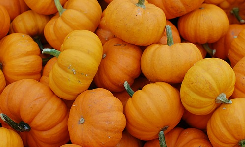 A pile of fall foods including pumpkins!