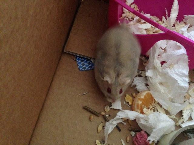 Hamster  4