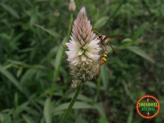 Foto Lebah atau Tawon