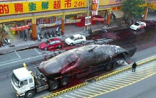 Najsmešnije slike kinezi prevoze kita