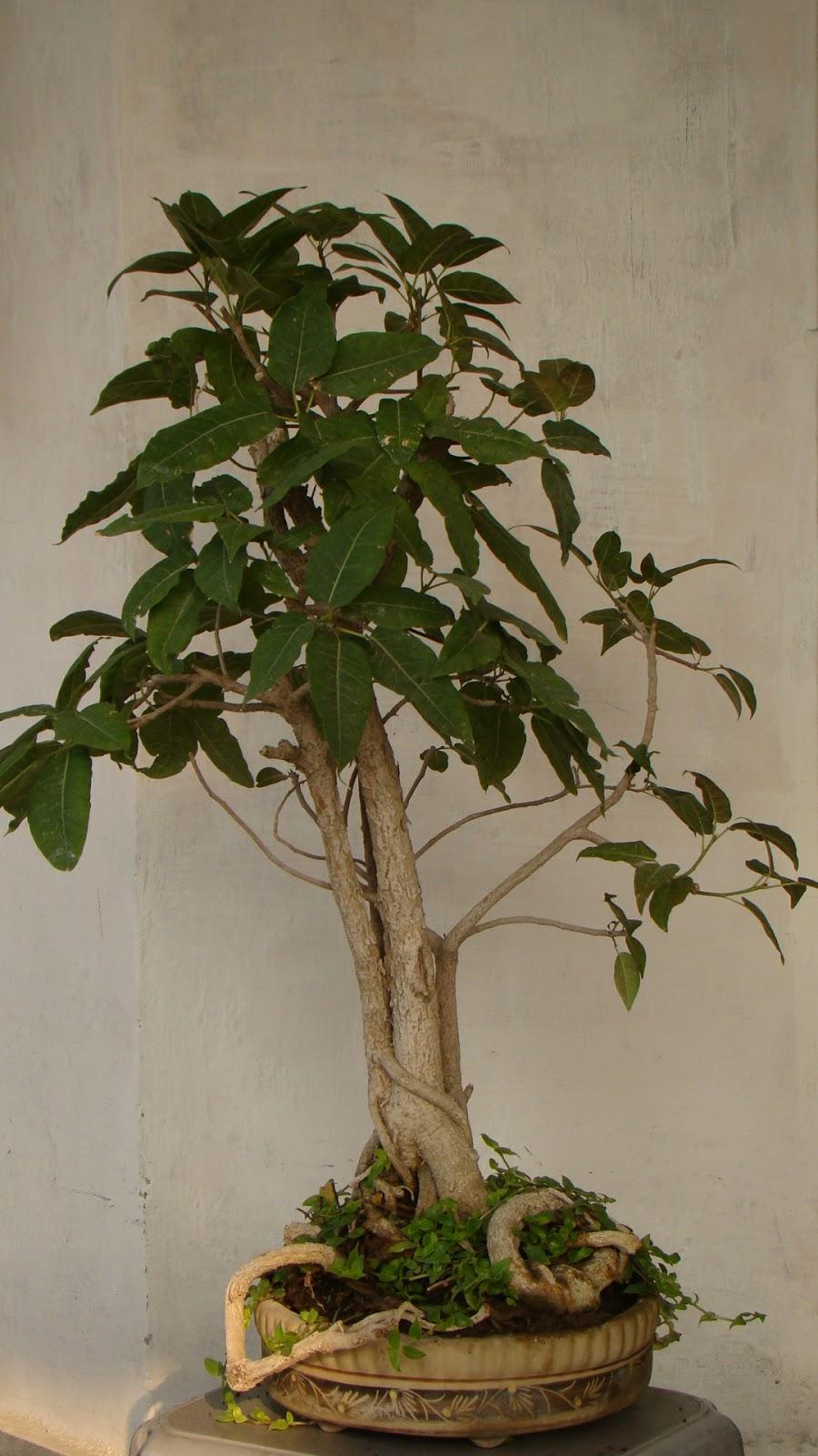 FAB HOBBY IDEAS 10 Bonsai The Zen Way Of Growing Trees